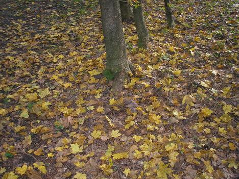 Séta az erdőszélen 3