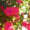 Virágaim_19