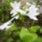Virágaim_22