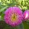 Virágaim_23
