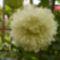 Virágaim_24