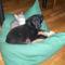 Vörci és Buci a tesó kutyussal