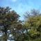 Őszi lombok