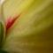 őszi virágzás 5