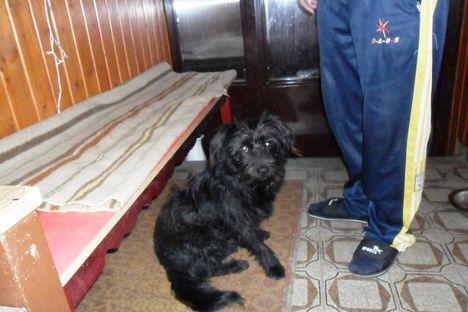 Talált! Szombathelyen kistermetű kutyus (2010.10.22.)