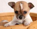a kutyák érdekében 4