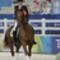 Philippa Johnson és Benedict, 2008 Equestrian 4