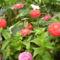 virágaim_18
