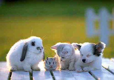 A barátság egy furcsa, de jó dolog!