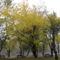 Picnik park ősszel