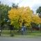 Telefonfűlke ősszel
