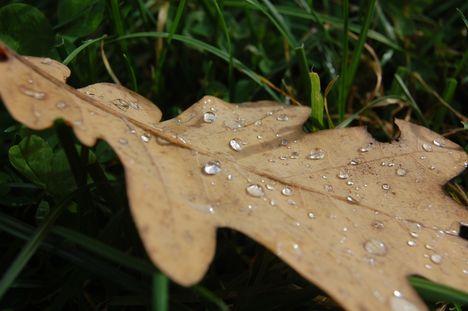 Váralja ősszel 6.