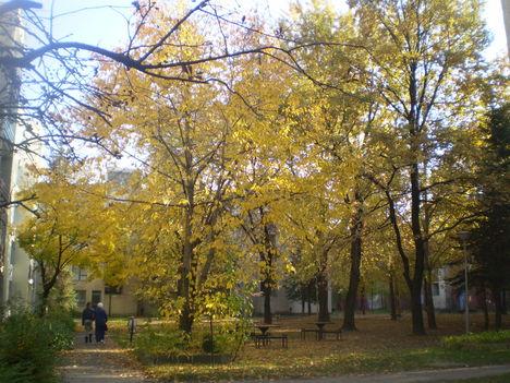 Őszi udvar az épületek közt.