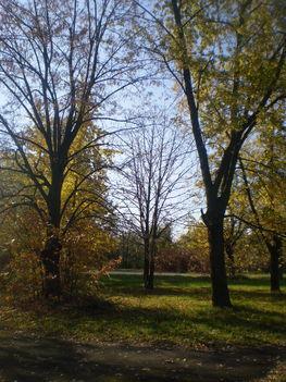 Vannak fák amelyek már lehullajtották a leveleit.
