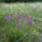 Csendélet védett növényekkel