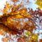 őszi fa alakzat