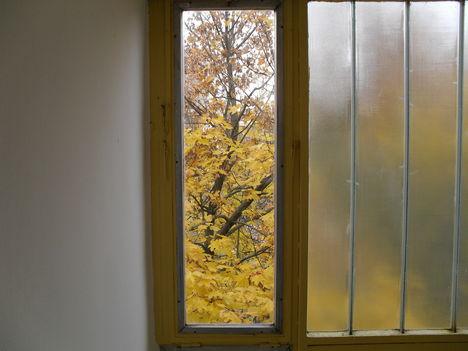 ablakon keresztül