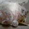 Athosz cica