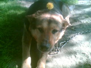 bobi,az én édes kutyusom volt 2
