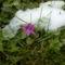 Fázós kis virág