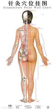 a test hátsó részének pontjai