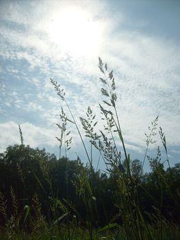 Bárányfelhők fenn az égen
