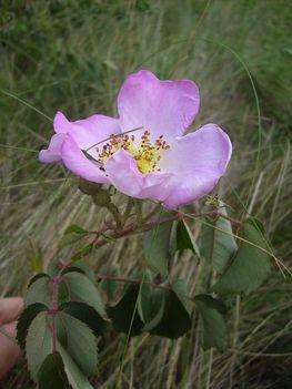 Kicsi növény, nagy virággal
