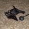 Ő a Máj,a fekete cica.(Így mondta anevét,amikor kérdeztük)