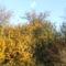 Hazafelé egy őszi napon 2