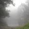 Duna part egy ködös reggelen 10
