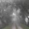 Duna part egy ködös reggelen 1