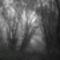 Duna part egy ködös reggelen 7