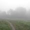 Duna part (Körtvélyes) egy ködös reggelen 6