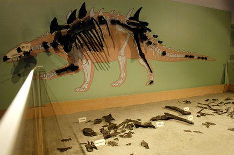 Hungarosaurus tormai