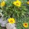 virágaim-25