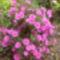 virágaim-31