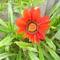 virágaim_27