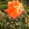 Virágaim_28