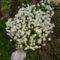 virágaim_29