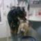 állatorvosnál 1