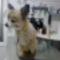 állatorvosnál 3