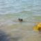 Balatoni nyár utó képei..... 1