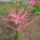 Nagyné Marika virágai
