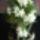 Pohárnikné Joli Kegyelet virágai