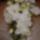 Pohárnikné Joli Esküvők virágai