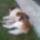 Kutyusaink,Kutya macska barátság