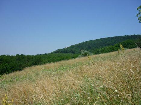 Hegyek, erdők, gyepek, nyári emlék2