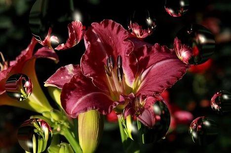 egy szál virág....
