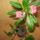 Erika szobanövényeim