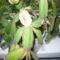 növények 002